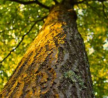 Golden Tree Trunk by kaitlyns-photos