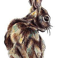 Rabbit by KellyGilleran