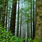Coastal Redwoods by Bob Moore