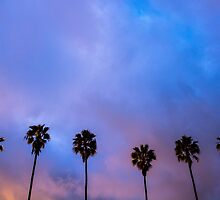 California Palm Trees by liminalstate