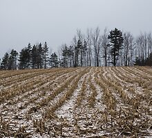 Snowy Winter Cornfields by Georgia Mizuleva