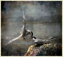 Now it's your tern by Alan Mattison