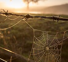 Spider Web and Reflection Sunrise by Jarrod Boord