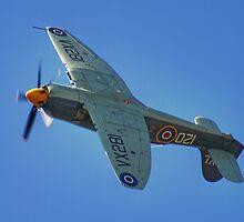 Sea Fury - Shoreham - 2013 by Colin J Williams Photography