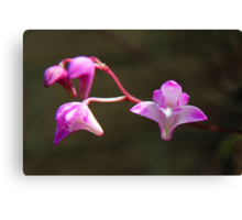 Native Orchid Canvas Print