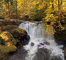 Whatcom Falls by Michael Russell