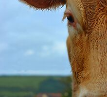 Half Cow Face by Alex Wagner