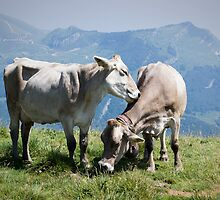 Two Cows by Alex Wagner