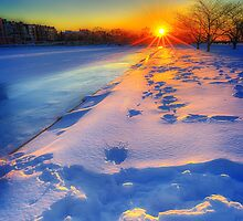 Down the barrel of a winter sun by Owed to Nature
