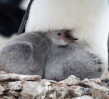 New Life - Antarctica by Kellie Netherwood