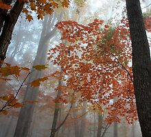 Misty Morning by stephen-brown