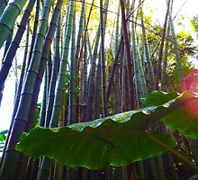 "Bambuseae - ""Tall Bamboo Shoots"" Tree by artkrannie"