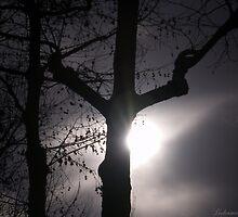 Dead Tree by LeDormeurDuVol