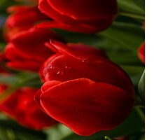 Vivid Red Tulips for Your iPad by Georgia Mizuleva