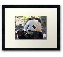 Bamboo Face Framed Print