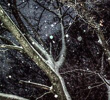 Trees In The SnowStorm by Jane Neill-Hancock