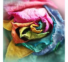Beautiful Rainbow Rose with Bright Petals Photographic Print