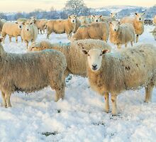 Winter landscape with sheep by StefanFierros