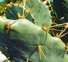 Cactus Opuntia - Pretty Spiky Haired Cactus by artkrannie