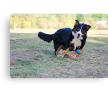 Get it, Berner! Canvas Print