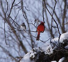 Cardinal in the Winter by Brian Fowler