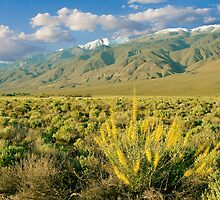 Princes Plume And White Mountains - Owens Valley California by Ram Vasudev