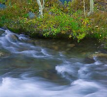 Rushing Stream and Creek Bank - Fall in Eastern Sierra California by Ram Vasudev