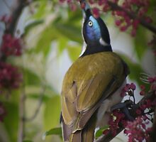 Blue face honey eater by myraj