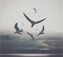 BIRDS by yurishwedoff