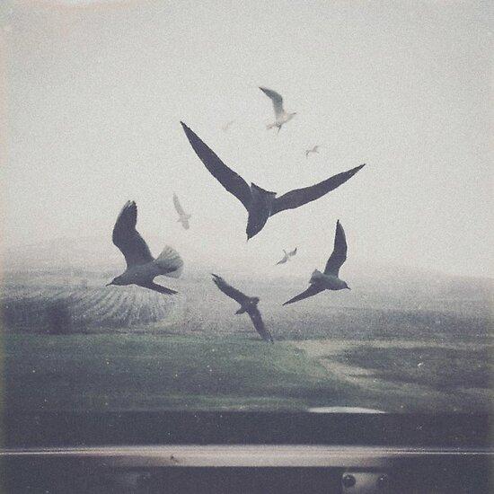 BIRDS by yurishwedoff