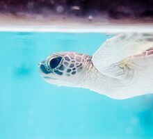 Baby turtle has a look again by urbankarma