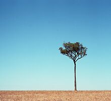 Tree by barrymansfield
