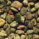 Stones in Pond by visualspectrum