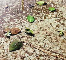 Fallen Leaves in Water Puddle by visualspectrum