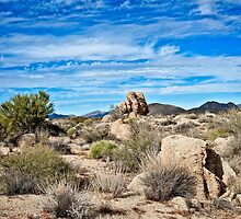 The Beautiful Bountiful Sonoran by Lee Craig