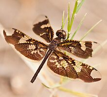 dragonfly insect photograph by wasootch