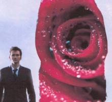 Rose. Sticker