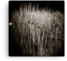 { reeds } Canvas Print