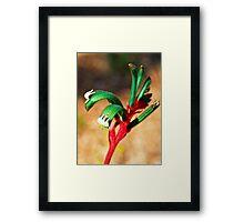 Red Kangaroo Paw Framed Print