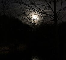 Moon Reflection by Bob Hardy