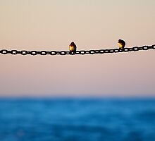 Two birds on a chain by Daniel Pertovt