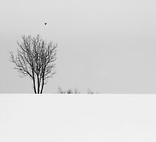 Winter solitude by Norbert Fritz