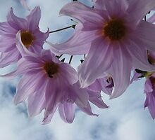 Tree Dahlia by Alison Broome