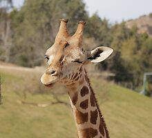 Giraffe winking eye by katie-k