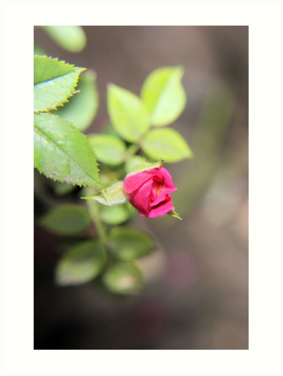 The Rose by aprilann