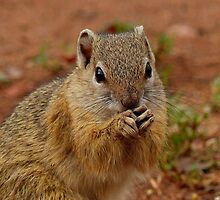 Say Your Prayers Before Breakfast - Ground Squirrel - SA by AndreaEL