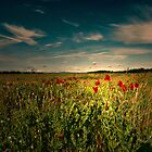 THE FIELD OF HOPE by leonie7