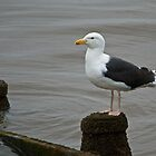 Great Black-backed Gull by VoluntaryRanger
