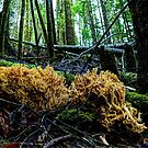 At Rest ~ Coral Mushrooms ~ by Charles & Patricia   Harkins ~ Picture Oregon