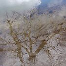 The reflection of  tree by elsie